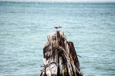 a bird on a stack of wood in the sea
