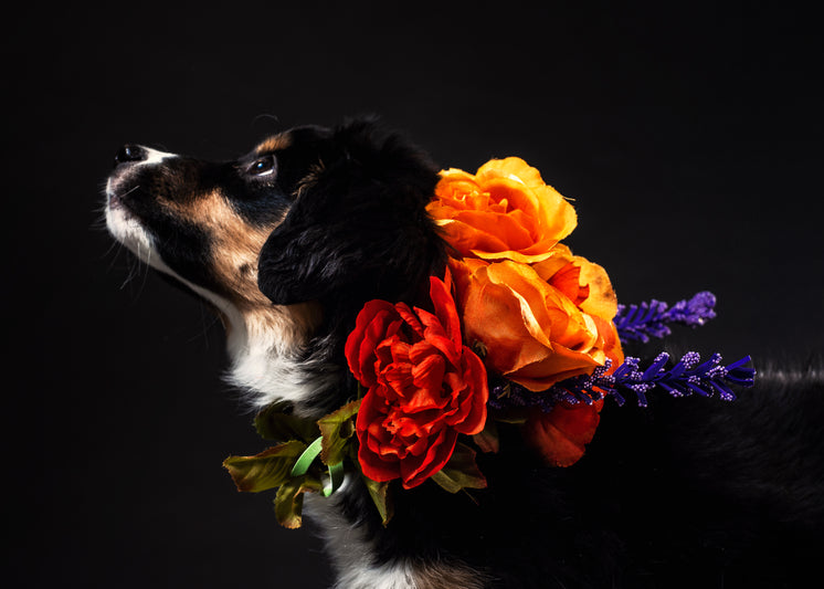 A Black And Tan Dog With A Flower Necklace