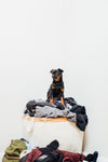 a brussels griffon protects laundry