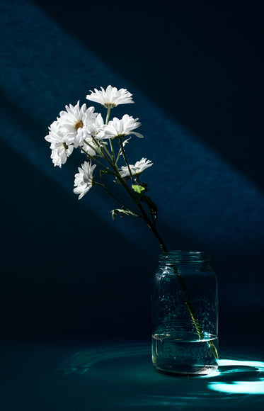 a bunch of white daisy in a glass jar against a blue background