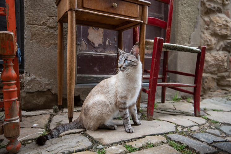 A Cat Chills By An Outdoor Table And Chairs