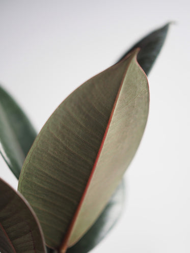 a close up of a leaf on white background