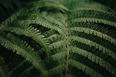 a close up view of a fern outdoors