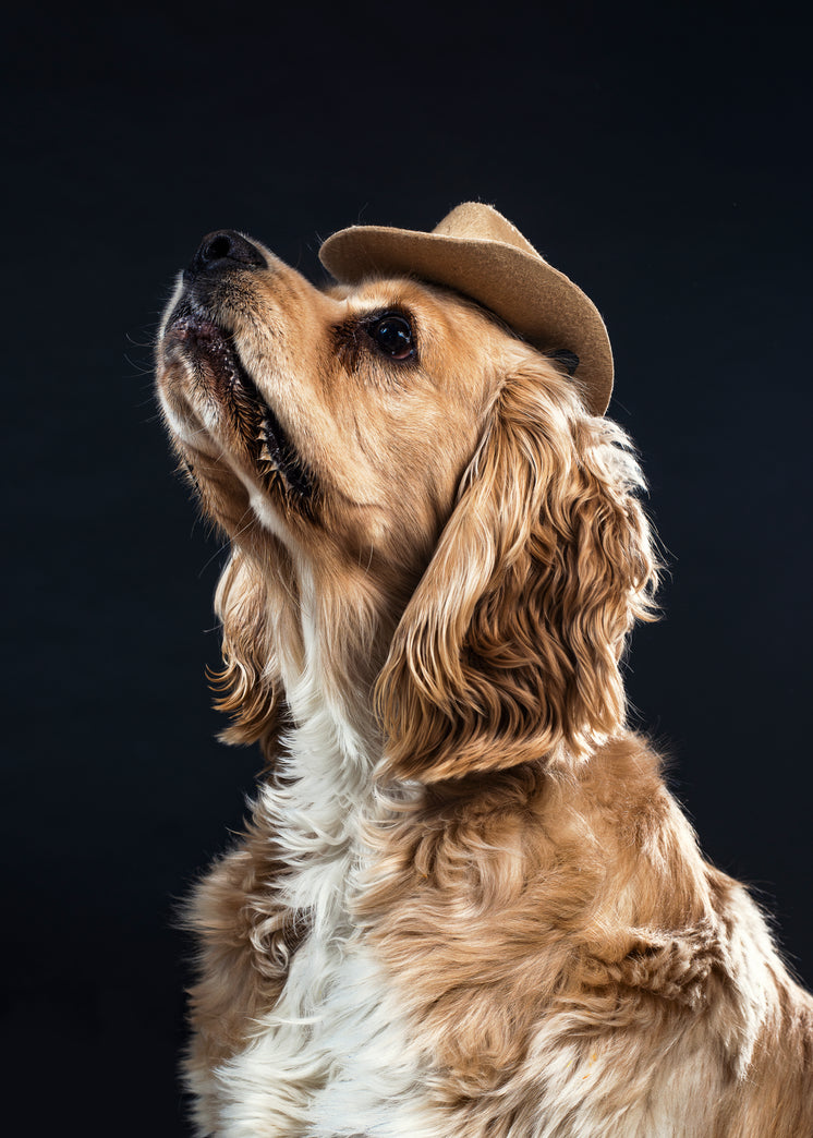 A Dog In A Cowboy Hat