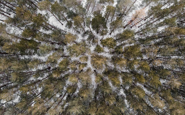 a drone view from overhead of a coniferous forest in winter