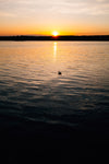 a duck takes in the setting sun on the water