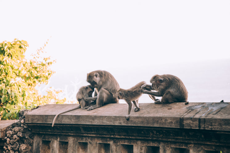 a-family-of-monkeys-tend-to-their-beauty