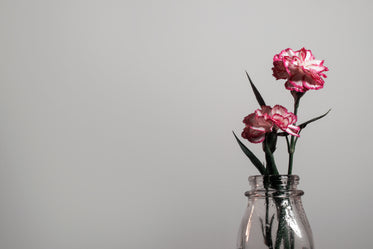a flower shows it's pink petals against a white wall
