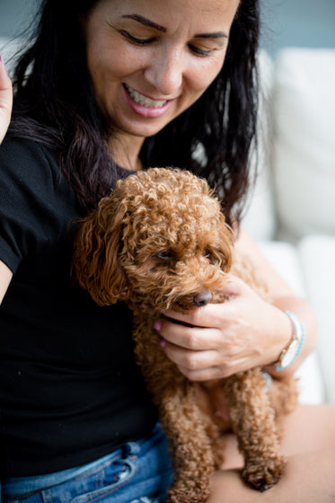 a fluffy brown dog sits on a persons lap