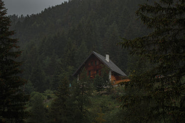 a frame wood cabin in forest