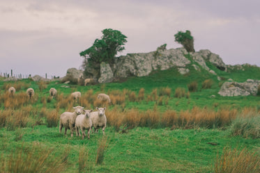 a group of sheep on a hill