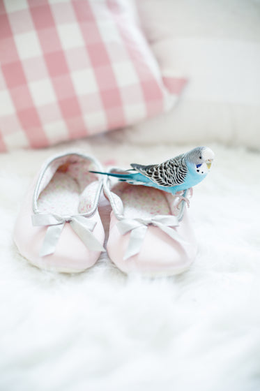 a parakeet sitting on shoes