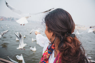 a person holds out a hand to feed white birds
