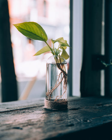 a plant in a water jar by a window