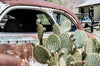 a prickly pear cactus and a rust car in the sun