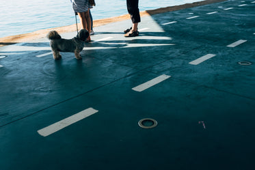 a pug on a leash guards a family standing by the sea