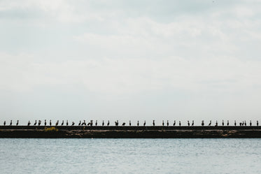 a row of birds on the waters edge