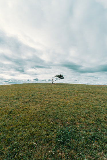 a single tree in the middle of a green grassy field