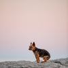 a small dog sits on a rock under sunset