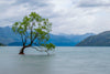 a solitary tree in a foggy lake with a mountainous backdrop