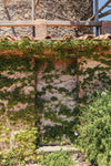 a stone wall of green leaves
