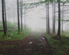 a walk in the woods on a misty day