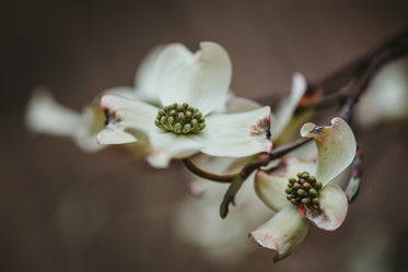 a white flower on a twig in the dark