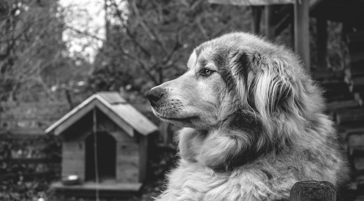 A Wise Dog Outside Their Kennel