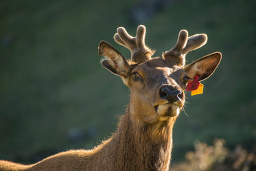 a young stag in the sun