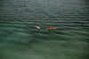 adventurists paddle on open green water