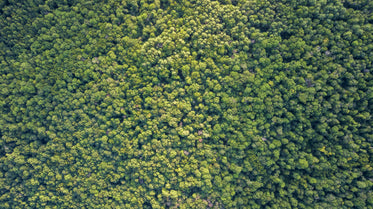 aerial image of green forest treetops