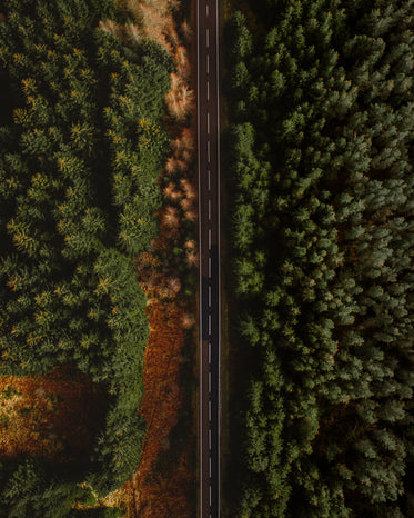 aerial photo of paved road surrounded by trees