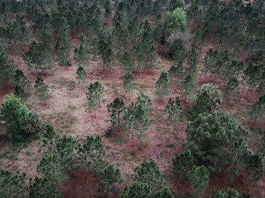aerial shot of sparse forest with red soil