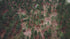 aerial view of trees on a red-soil hillside