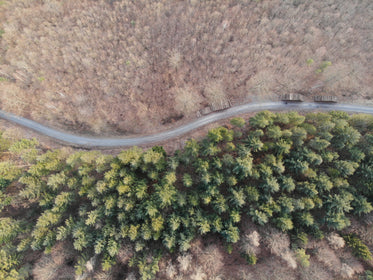 an aerial view of a road with trees either side