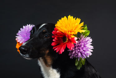an explosion of flowers around this dog's face