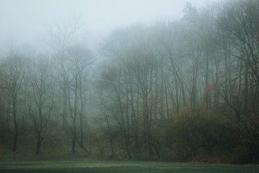 an foggy treeline surround a soccer field
