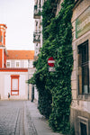 an ivy-covered shabby-chic building