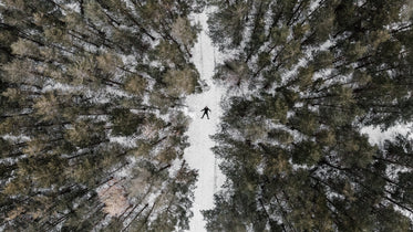 an overhead view of a snow-covered coniferous forest in winter