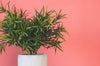 artificial plant against pink background