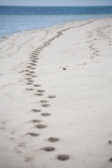australian beach footprints