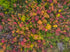 Free Stock Photo of Autumn Leaves On Tree Canopy — HD Images
