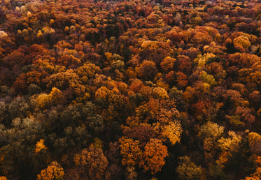 autumn trees covering the landscape