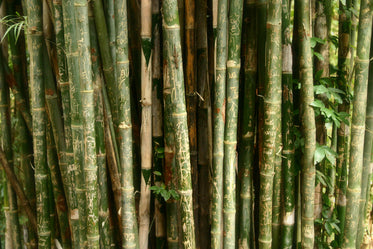 bamboo with engravings