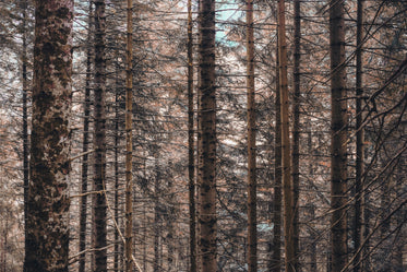 bare tree branches in a dense forest