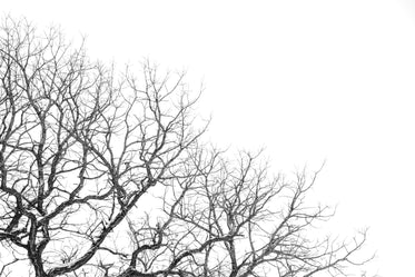 bare winter tree branches