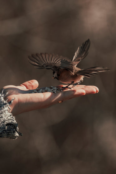 bird spreads its wings as it lands on the palm of a persons hand