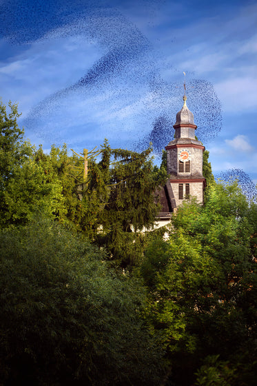 bird swarm above old building in the forest