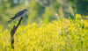 bird with a green worm in a field of yellow flowers