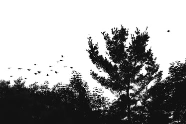 High Res Birds Flying Above Treeline Picture — Free Images